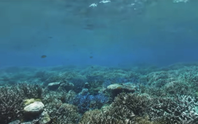 Learning through fieldwork on Pacific coral reefs, Stanford University News
