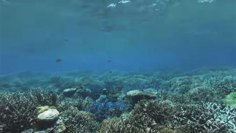 Airai Bay, Palau